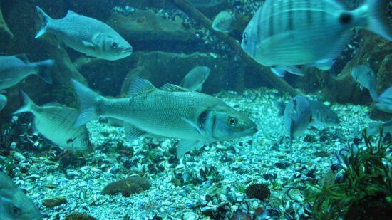 Aquamuseu do rio Minho reinventa-se e promove exposição bimestral online