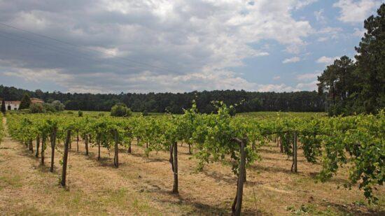 Adega de Monção recebe apoio 744 mil euros para reestruturação e reconversão das vinhas