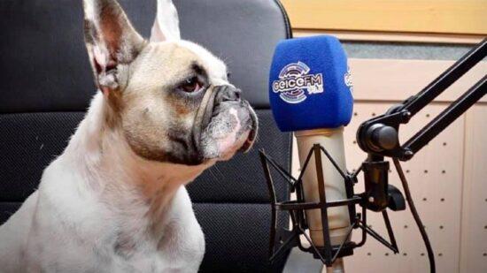 Candidata de quatro patas à Câmara de Viana do Castelo esteve nos estúdios da Rádio GEICE